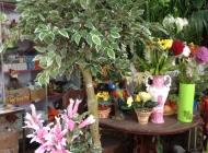 Декоративные деревья и цветы